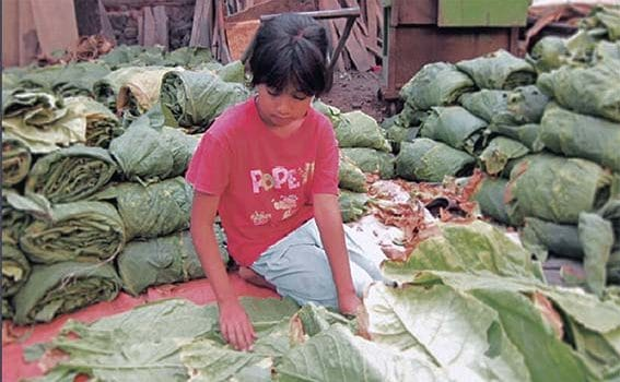Child labour in agriculture is on the rise