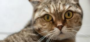 Animals like cats, ferrets, lions and cows can carry TB and pass it onto humans. In 2014, the United Kingdom confirmed its first known cases of cat-to-human TB transmission however public experts stress cat-to-human transmission is rare