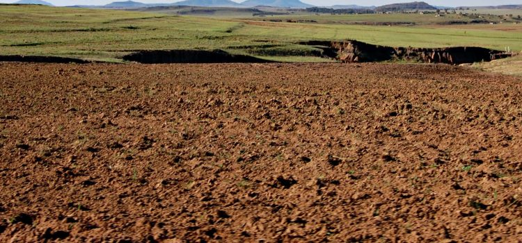 Drought in the Eastern Cape crippling small-scale farmers