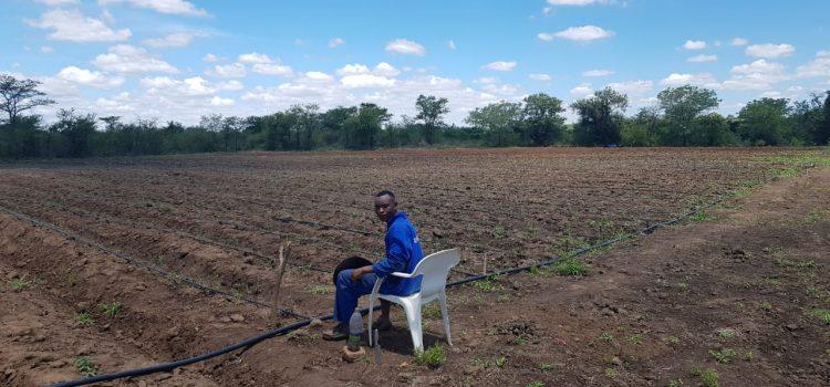 Making farming fashionable for health