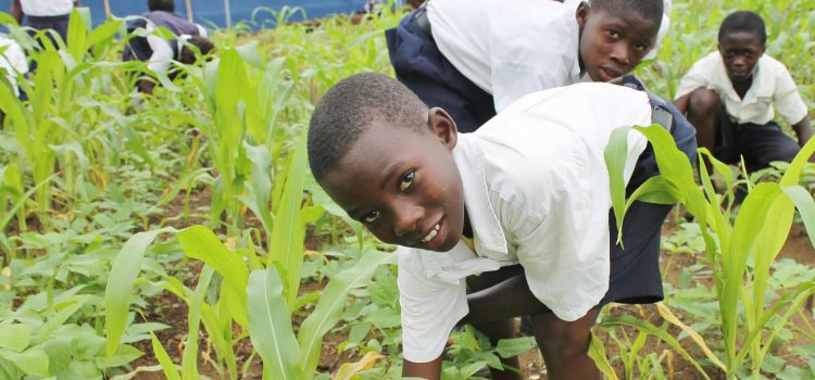 A young farmer encourages other young people to produce their own food