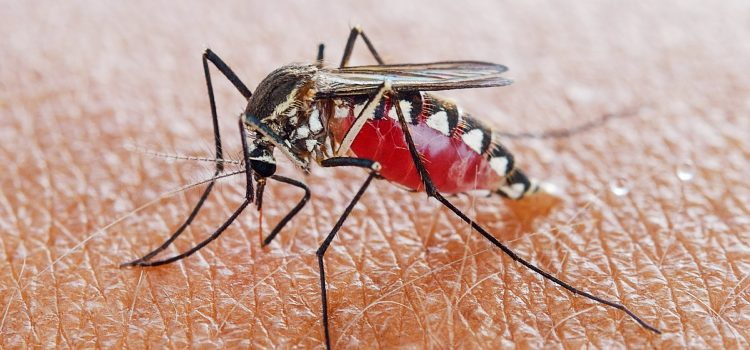 Heavy rains in Limpopo means increased malaria infections