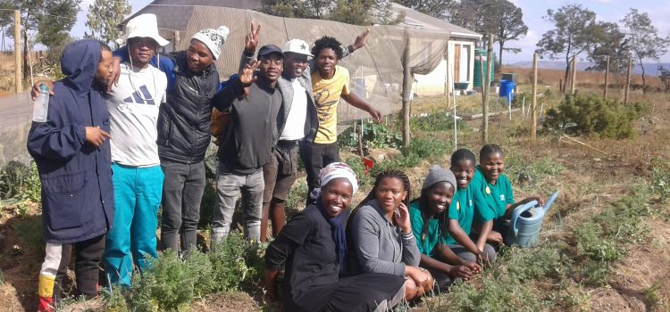 Organic farmer encourages youth to get into food gardening