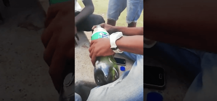 Tackling South Africa's Codeine Addiction