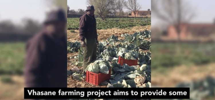 Vhasane farming project in North West