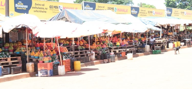 Sparking a fresh fruit revival in the heart of Venda
