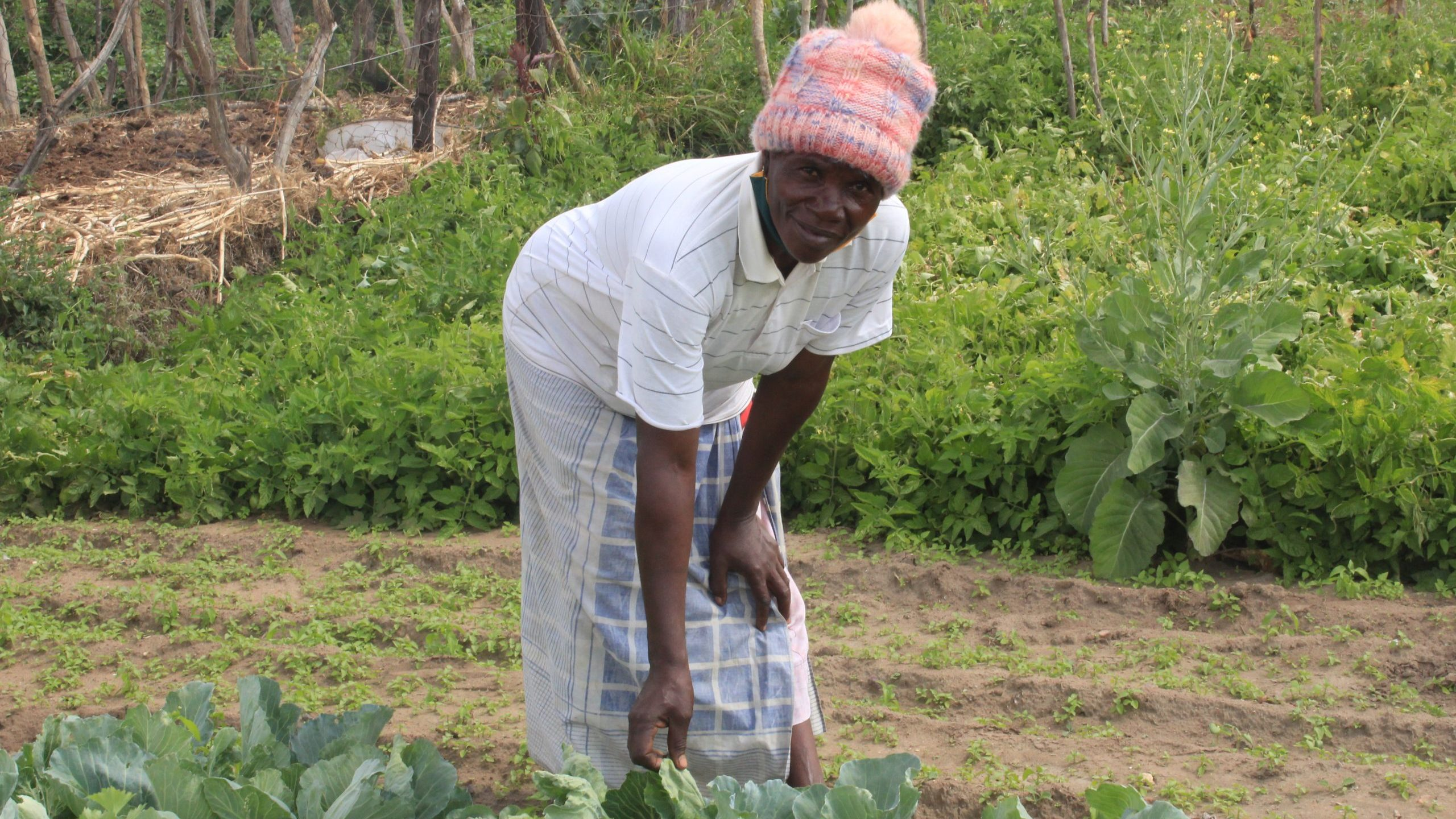 Food gardens fight rural poverty