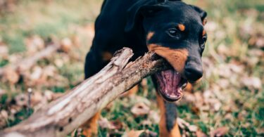 The Nelson Mandela Bay in Gqeberha has been hit by an outbreak of rabies, claiming the life of a nine-year-old boy.